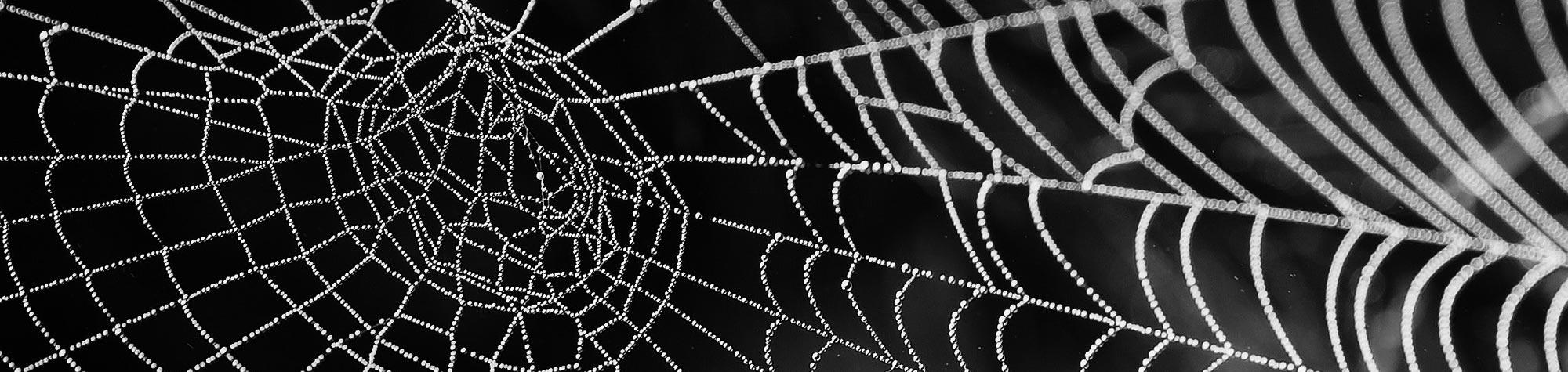 Influencers, ¿reales o monstruos del lago web?